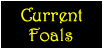 finchwood_miniaturesbutton_currentfoals.png